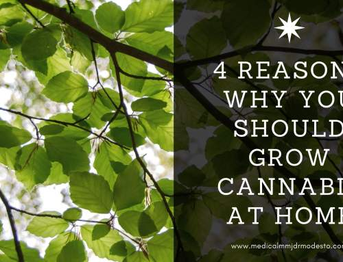 4 Reasons Why You Should Grow Cannabis at Home